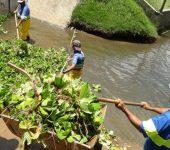Saae trabalha diariamente na remoção de algas em bacia de contenção no Jd. Abaeté.