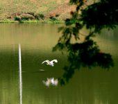 Semana do Meio Ambiente começa no dia 5 repleta de atividades ao público.